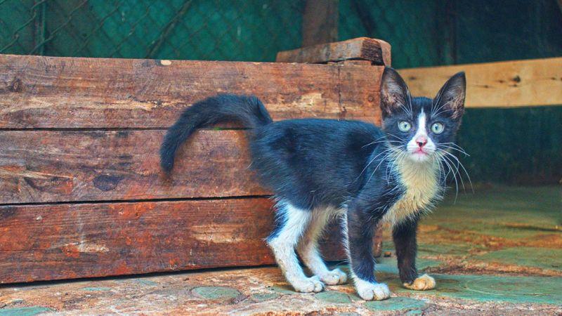 Havanna, Katze im Markt