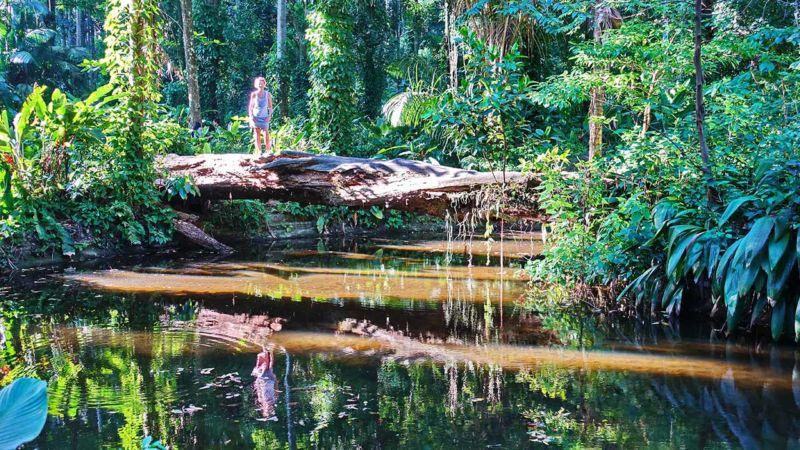 Dschungelatmosphäre Parque Lage