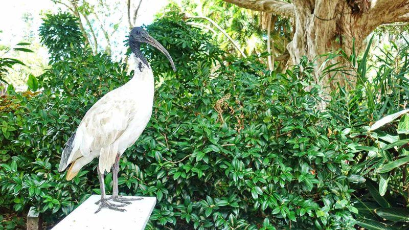 Ibis im Botanischen Garten